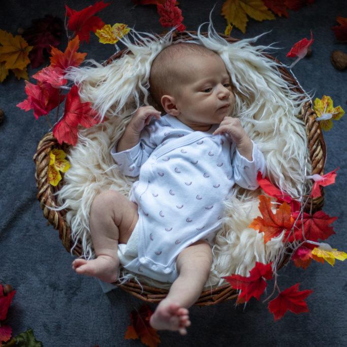 photo naissance portrait dans panier automne